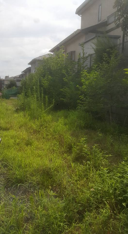 草刈り工事集①~ハチが怖くても草刈りします♬~