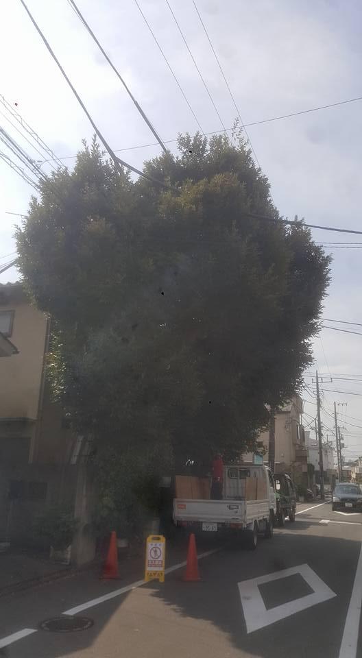 都内~高木剪定 ビフォーアフター ~