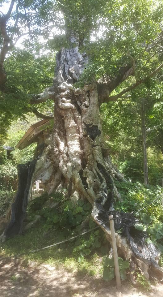 木々の会話があるって知ってました?