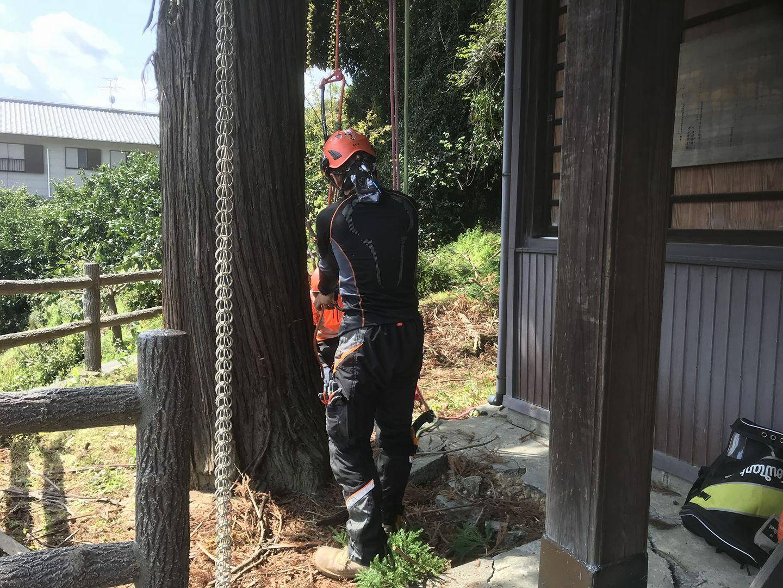 2018/4 静岡県にて伐採作業~ツリークライミング~