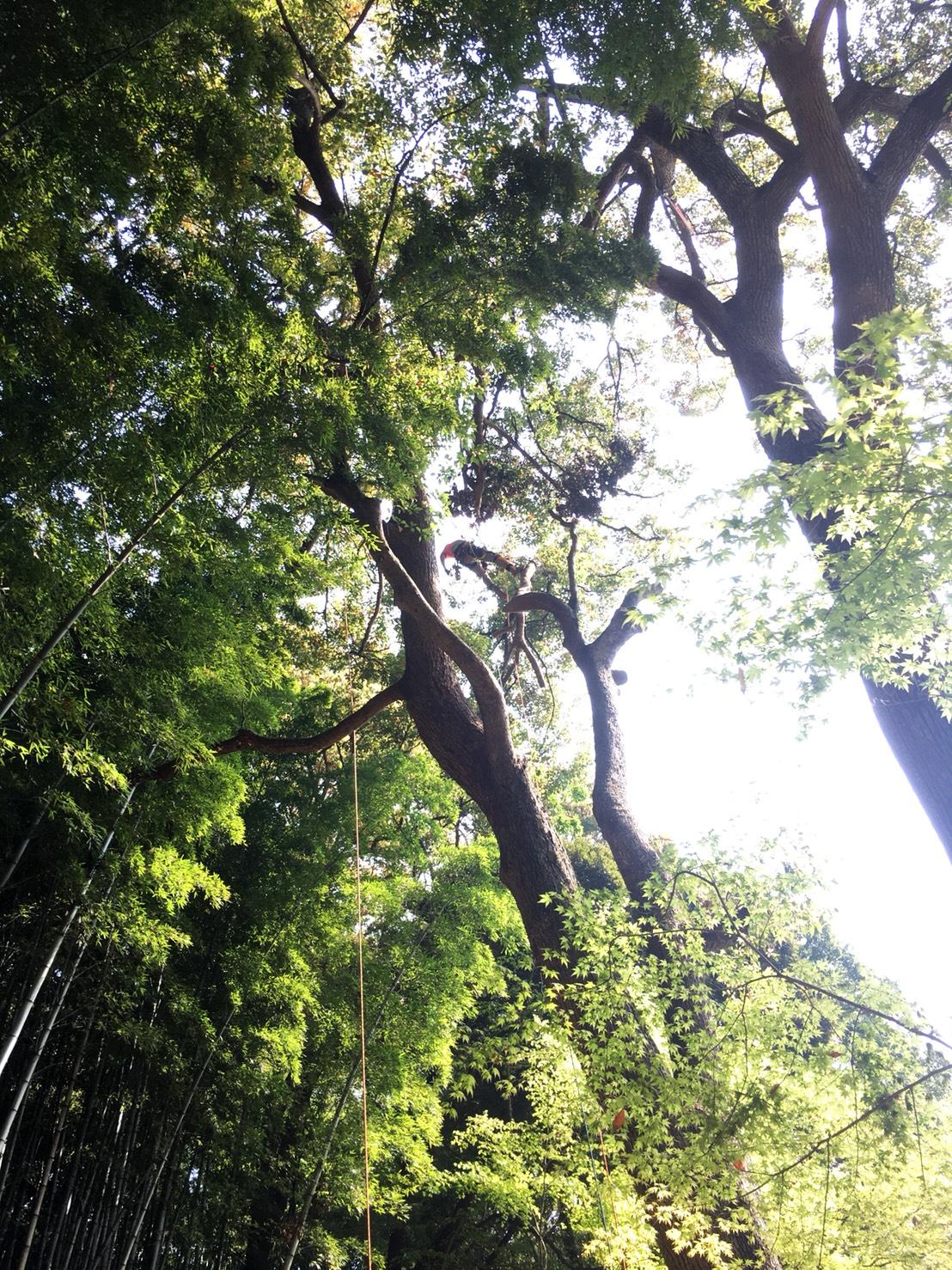 2018/4 神奈川県横浜市~剪定~ツリークライミング
