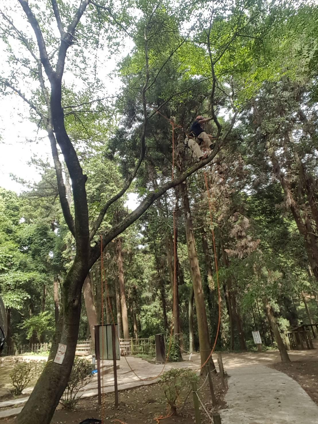 枯枝除去♬公園管理~ツリークライミング~